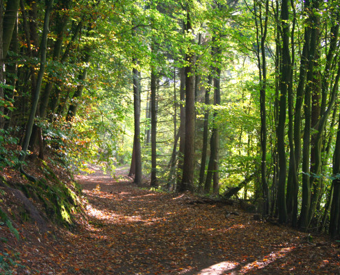 Waldweg Schnakenbek