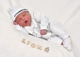 lion_1311